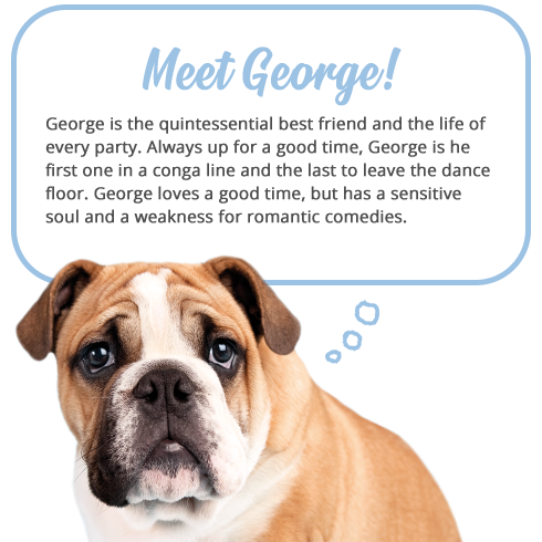 Meet George   Rachael Hale Brand   Envelopes.com